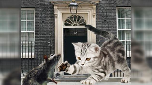Una nueva mascota felina resolverá el problema de ratas en Downing Street