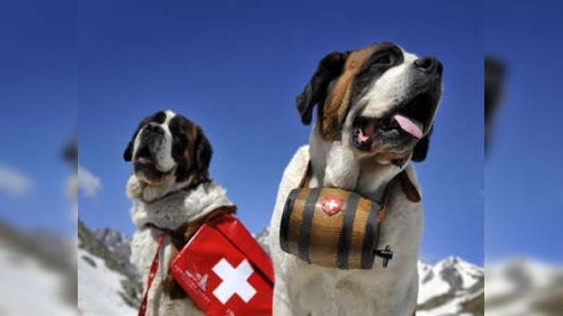 """Suiza dijo """"no"""" a abogados para animales"""