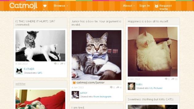 Nace un 'Facebook' solo para gatos