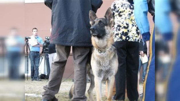 Un perro doméstico es condecorado en Alaska por ayudar a la policía