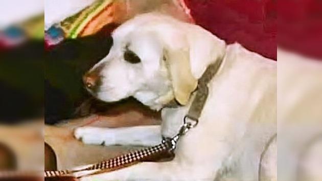 Mujer japonesa se reúne con su perra desaparecida después del terremoto