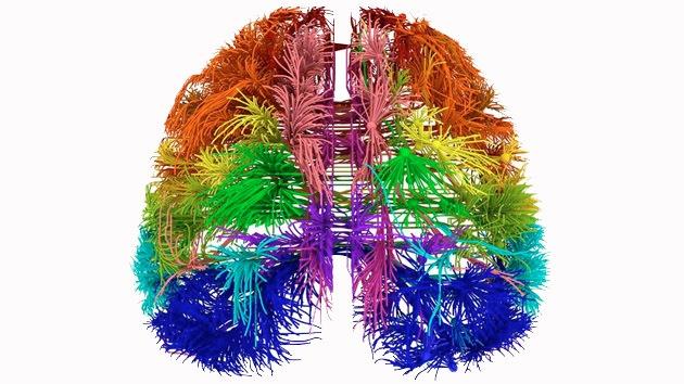 Misterios del cerebro humano: Crean mapas 3D de sus genes y sendas