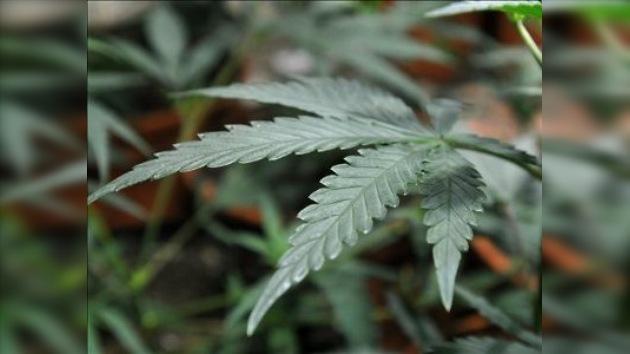 Una feria de marihuana en California