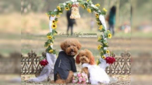 Vida de perros... boda con todo lujo de detalles