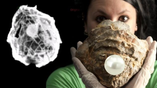 Hallan la perla jurásica más grande del mundo, pero nadie la puede ver