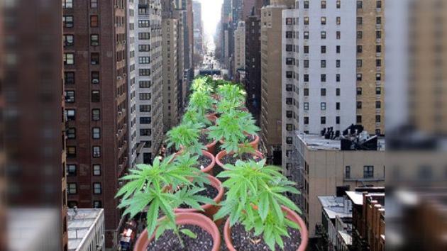 ¿Una plantación de cannabis en el centro de Nueva York?