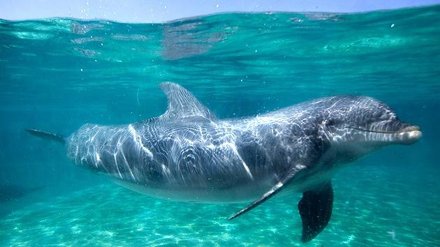 EE.UU.: Mujer revela detalles de un extraño experimento con delfines y LSD