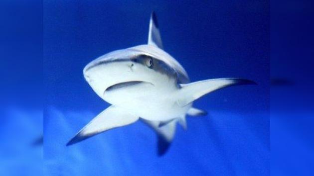 Tres buques zarpan para atrapar a un tiburón asesino en Rusia