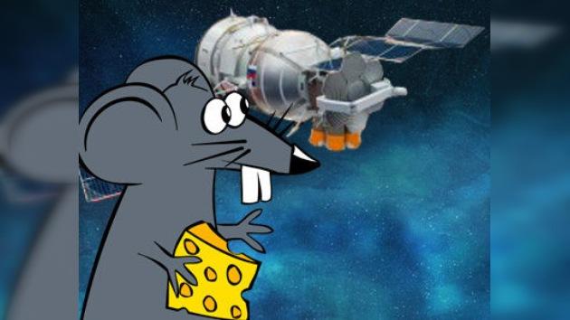 50 ratones destinados a conquistar el espacio