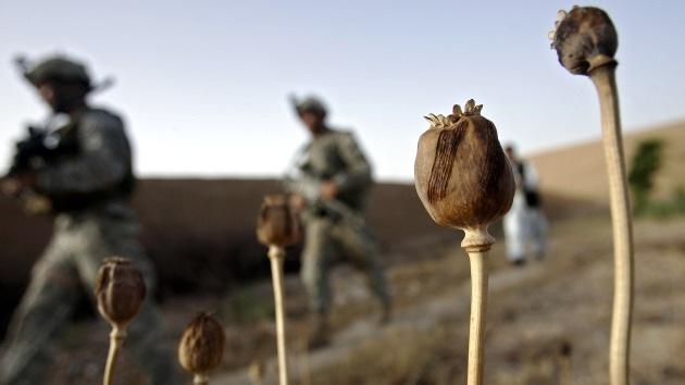 La producción de opio en Afganistán seguirá prosperando