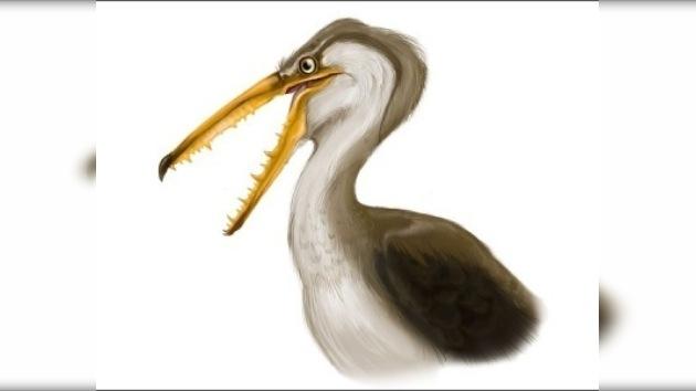 Un ave prehistórica chilena bate el récord de envergadura