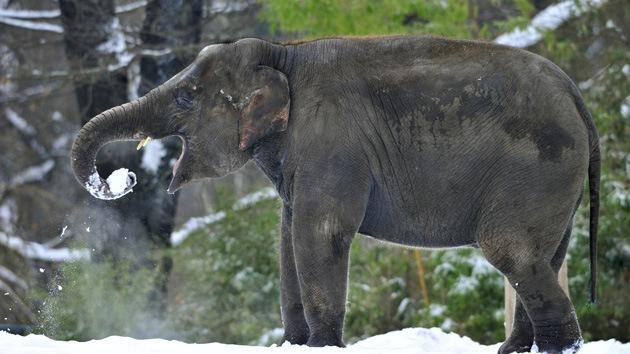 Dos elefantes de un circo bebieron vodka para sobrevivir al frío siberiano