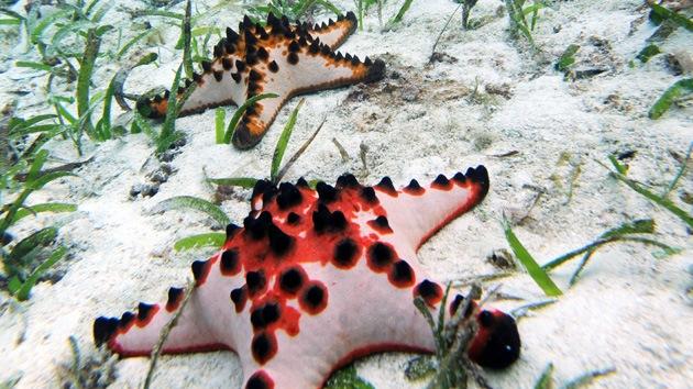 Científicos en pánico por la muerte masiva de estrellas de mar en EE.UU.