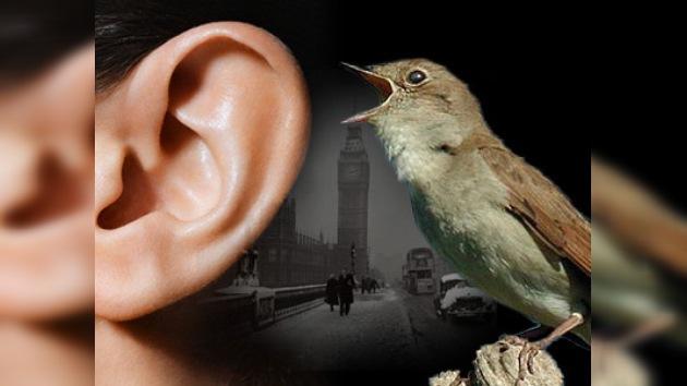 Es saludable escuchar el canto de los pájaros 5 minutos al día