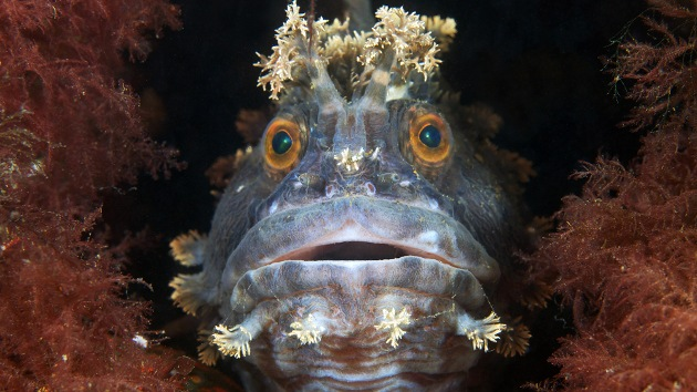 FOTOS: Animales subacuáticos del círculo polar