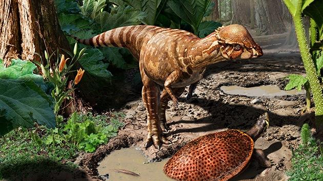 Encuentran en Canadá fósiles de una nueva especie de dinosaurios