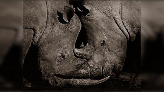 El corazón de África, en la Galería Fotográfica Lumiere de Moscú