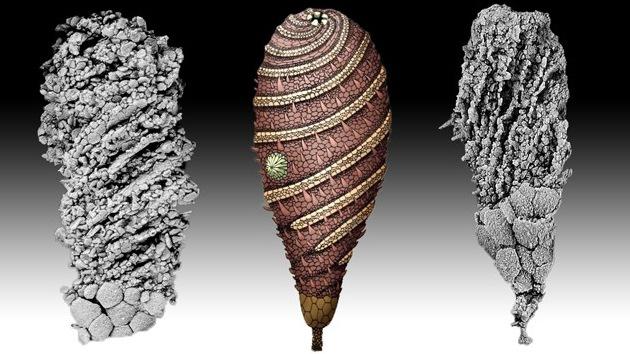 Desentierran a una criatura de 520 millones de años, la más antigua en su especie