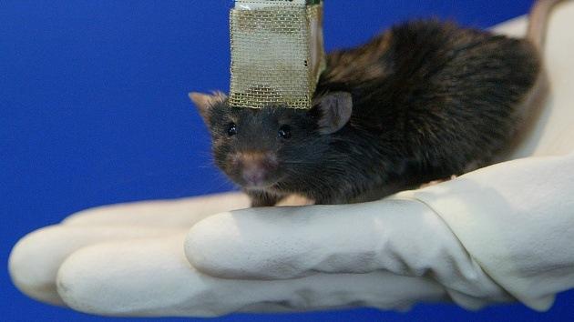 Científicos logran borrar y restaurar la memoria