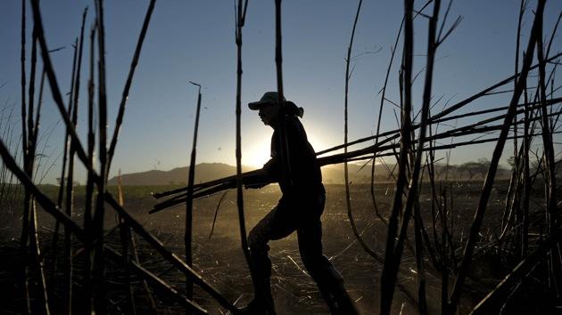 El misterio sobre la fatal enfermedad renal de los cañeros de azúcar echa raíces en América