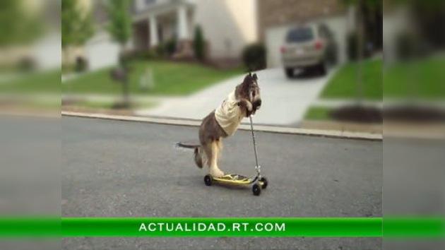 Un virtuoso del patinete de cuatro patas