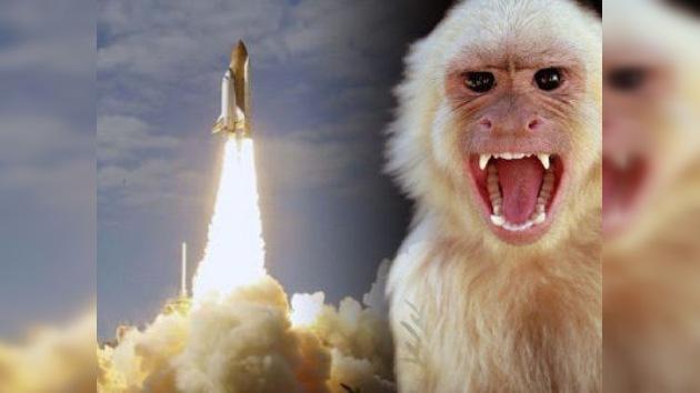 Irán lanzará al espacio una cápsula con un mono