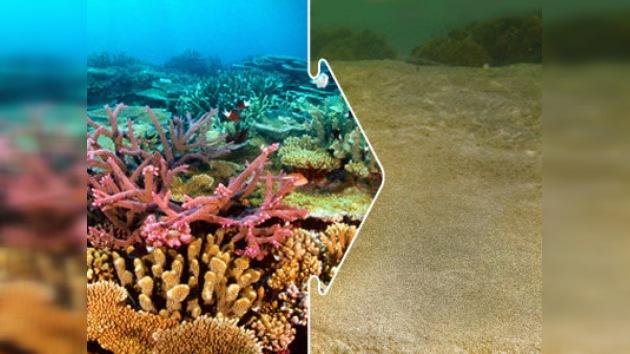 Los arrecifes coralinos pueden desintegrarse ya en nuestro siglo