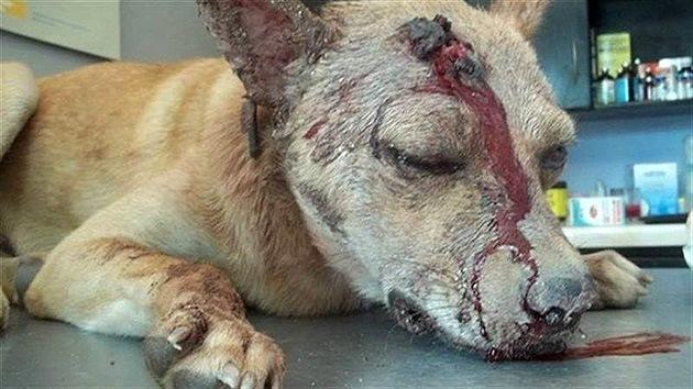 Un hombre golpea y apuñala al perro de su exnovia por venganza
