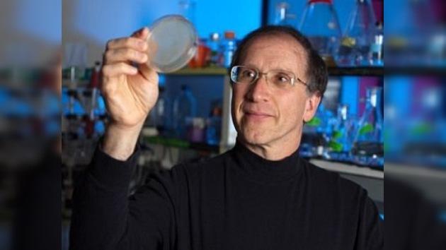 Diseñan proteínas artificiales que funcionan como naturales
