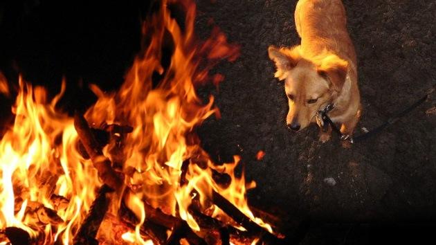 Animalada 'inquisitorial' contra un perro: atan y queman vivo a un can en España