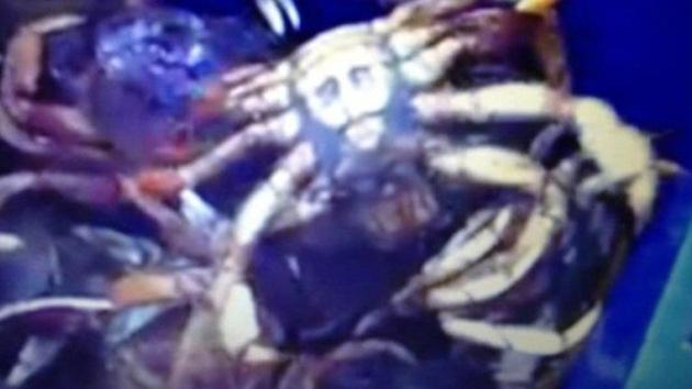 Pescan a un cangrejo con una imagen similar a un Jesucristo en el caparazón