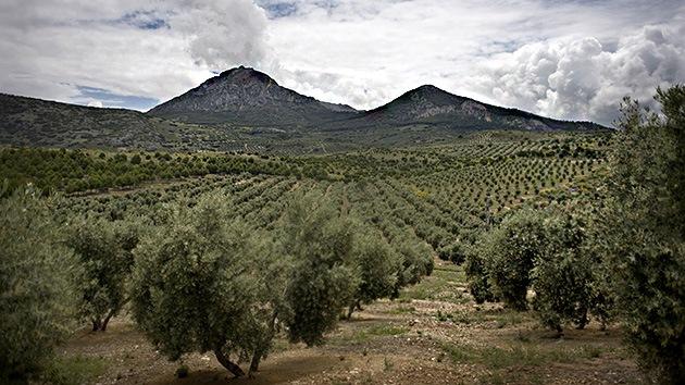 España: Moscas transgénicas 'siembran' preocupación entre agricultores y ambientalistas