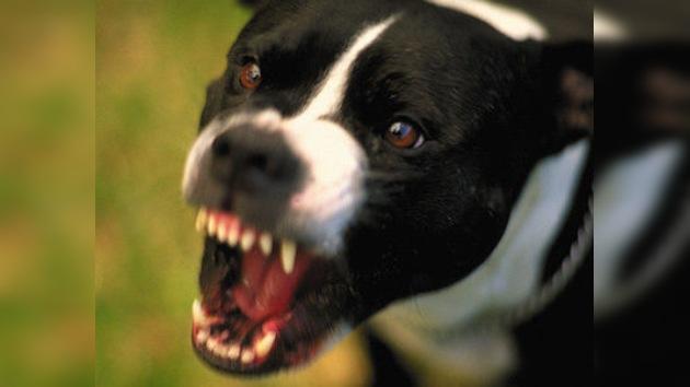 ¿Perros peligrosos o dueños negligentes?