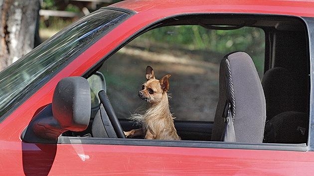EE.UU.: Arrestan a una mujer tras morir su perro desatendido dentro de un coche al sol