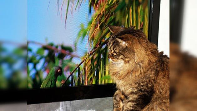 Entretenimiento 'a lo bestia': crean un YouTube para gatos