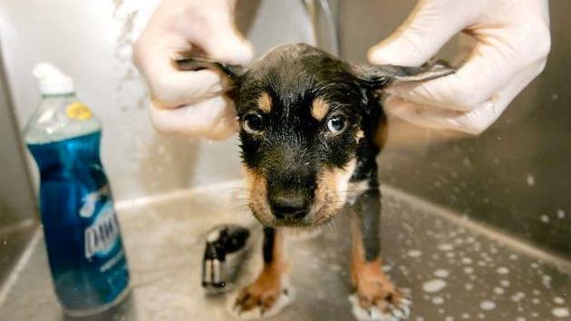 Sobrevive un cachorro de perro tras pasar encerrado un mes en un coche