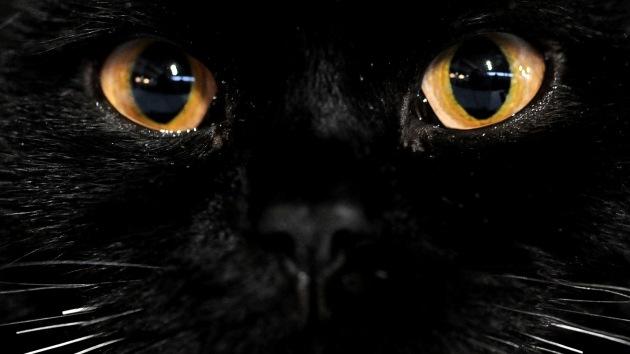 Pánico ante un gato negro: origen de las supersticiones que seguimos en la actualidad