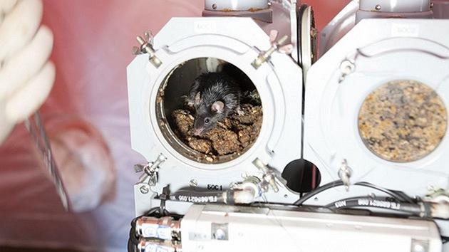 Los animales podrían adelantar al hombre en la conquista del espacio profundo