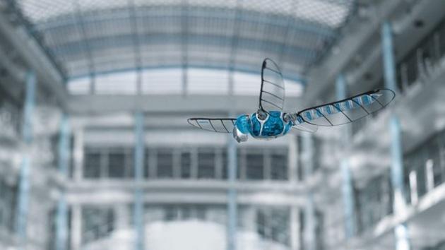 Video: El primer vuelo de una libélula robótica