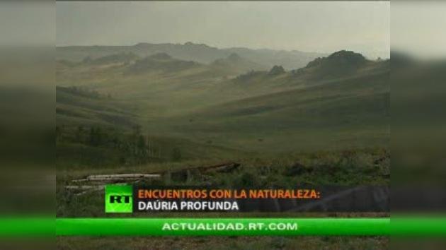 ENCUENTROS CON LA NATURALEZA : DAÚRIA PROFUNDA