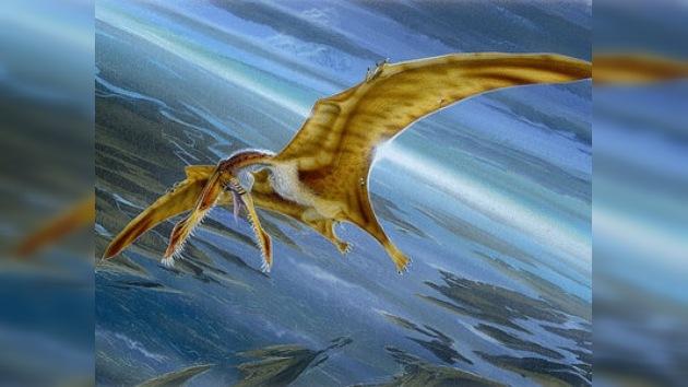Los pterosaurios podían volar
