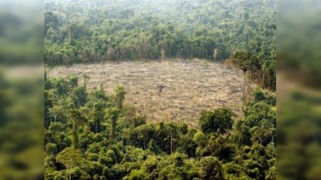 El progreso  vuelve a amenazar a los 'pulmones del planeta'