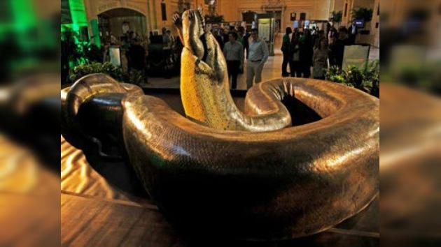 La 'serpiente' más grande del mundo se exhibe en EE. UU.