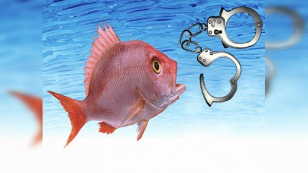 Singular arresto de peces exóticos
