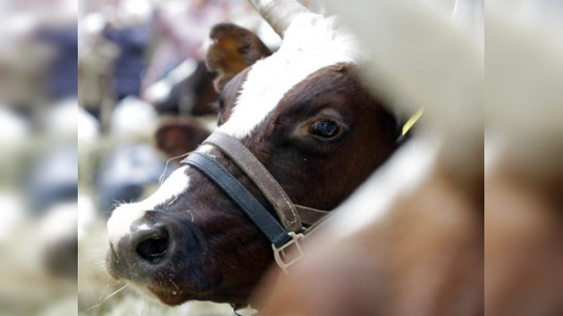 Granjero norteamericano se suicidó tras matar 51 vacas lecheras a balazos