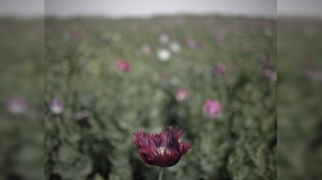 Decomisada en Afganistán la carga de heroína más grande de la historia