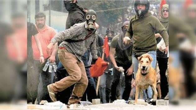 Un perro preside las manifestaciones de protesta en Grecia