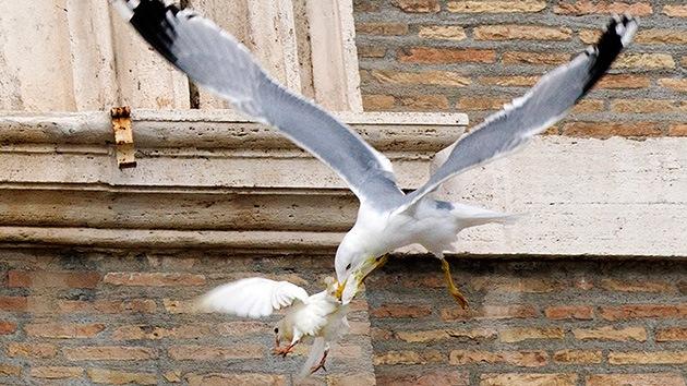 Italia: Los defensores de los animales piden al papa que no lance más palomas