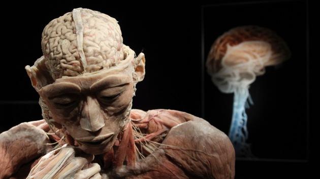 Juventud eterna: hallan una zona del cerebro que no envejece