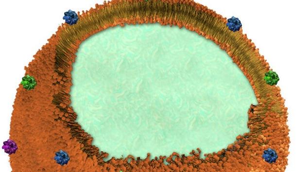 Científicos crean una 'nanoesponja' que absorbe las toxinas del organismo